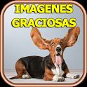 Imagenes Graciosas Gratis icon