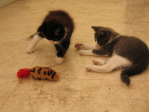 Photo: Bella and Thor, the runt of the litter.