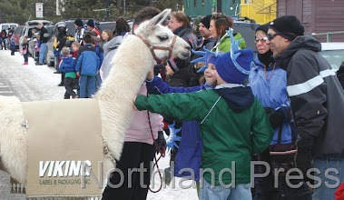 Photo: Kids take a minute to pet a llama during the Jubilee parade - photo  by Brenda Brodmarkle