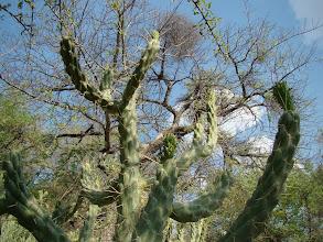 Photo: #014-L'arbre Marula au lac Otjikoto