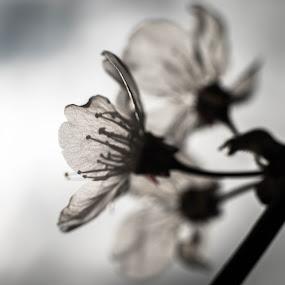 by Eden Meyer - Flowers Flowers in the Wild (  )