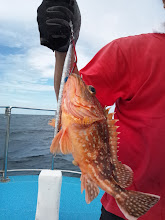 Photo: アラカブでした。 ・・・130マイルぐらい走り回りましたが、さっぱりな釣行でした。