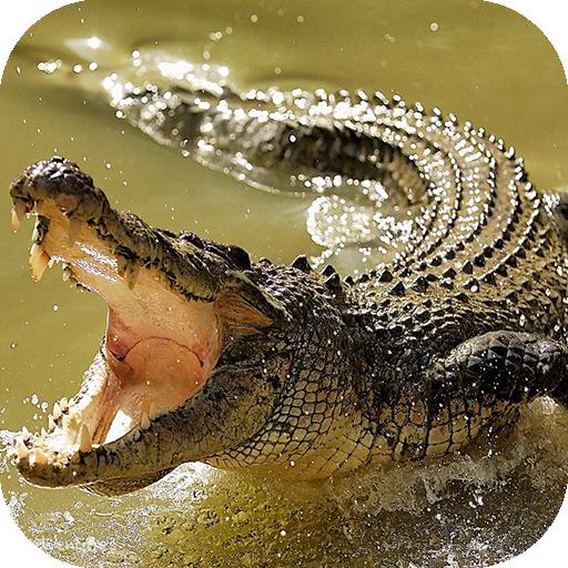 crocodile hd wallpapers apps