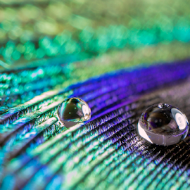 Peacock Feather  by Robert George - Abstract Macro (  )