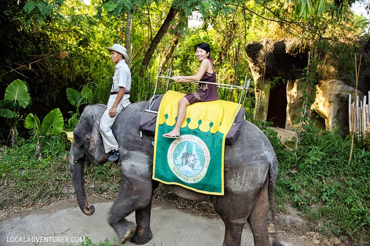 Bali Safari and Marine Park (Top Things to Do in Bali Indonesia).