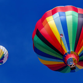 Colorful Flight by Alvin Simpson - Transportation Other ( sky, flight, hot air balloon, color, blue, balloons, transportation,  )
