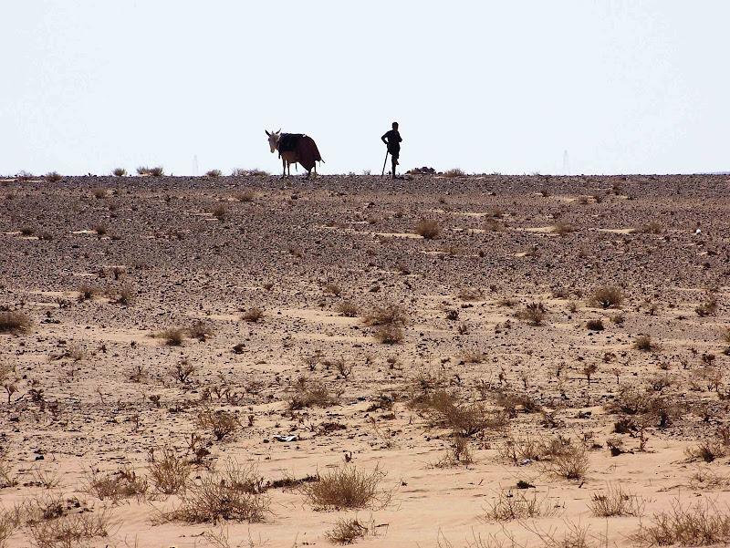 verso la desertificazione di antonioromei