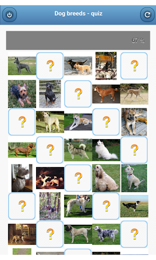 Dog breeds - quiz