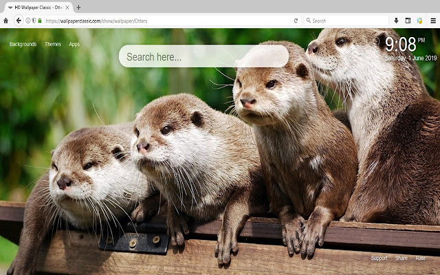 Otter HD Wallpapers New Tab Themes
