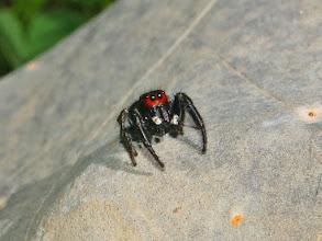 Photo: Bloody Spider