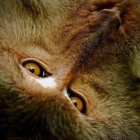 watcher by Little Shogun - Animals Other Mammals