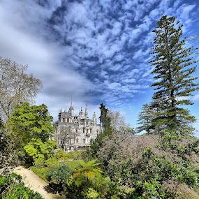 Quinta da Regaleira by Julio Cardoso - Buildings & Architecture Public & Historical ( araucária, quinta da regaleira, sintra, portugal, carvalho monteiro )