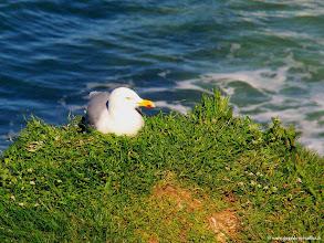 Photo: #022-Etretat, un goéland.