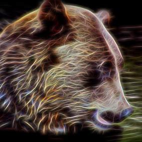 by Katie McKinney - Digital Art Animals ( bear, grizzly, animals, effect, zoo, creative, artsy, art, colorado, fur, effects,  )
