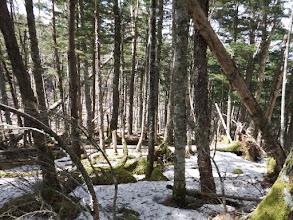 伐採地は右(北)から迂回