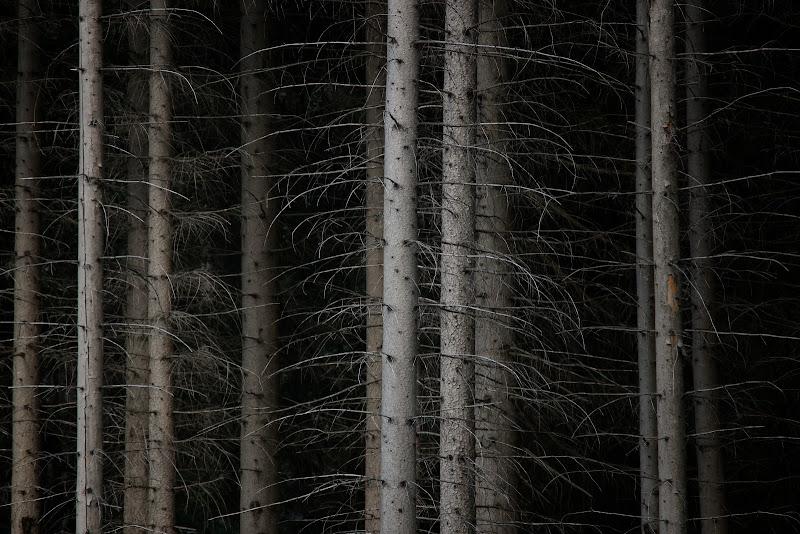Al di là del bosco di Zafs_77
