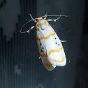 Cyana Moth