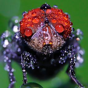 basah basah pagi-pagi by Miswar Rasyid - Animals Insects & Spiders