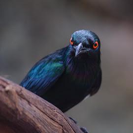 by Antonio Winston - Animals Birds