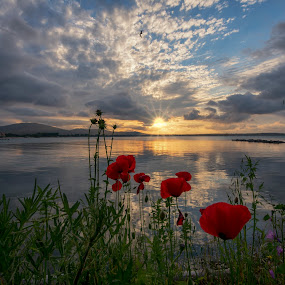 The poppies and the sunset by Atanas Donev - Landscapes Sunsets & Sunrises (  )