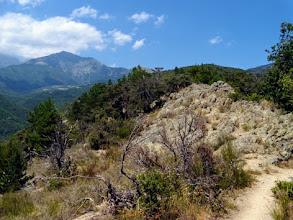 Photo: Nel caldo della vegetazione mediterranea, il Canigou alle spalle.