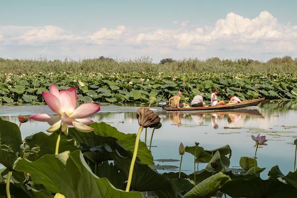 Navigare tra i fiori di loto di Modna