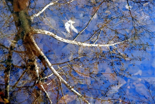Reflection – Little Femme Osage Creek Photograph by Dennis McCarthy