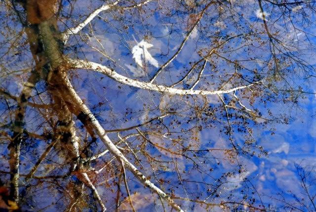 Reflection – Little Femme Osage Creek Photograph by Dennis McCarthy