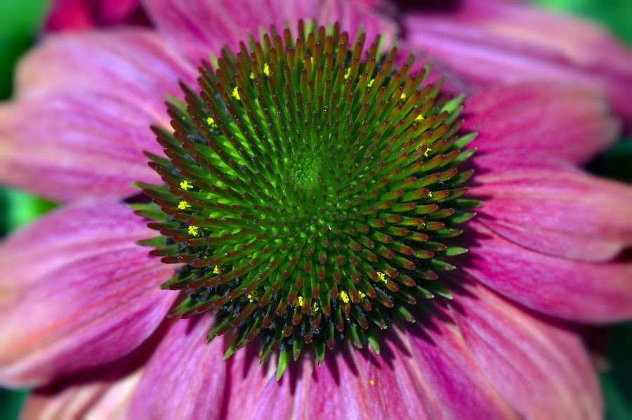 by Andrew Halpern - Nature Up Close Flowers - 2011-2013