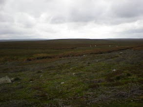 Photo: PW - From Tan Hill to Middleton in Teesdale: Bowes Moor