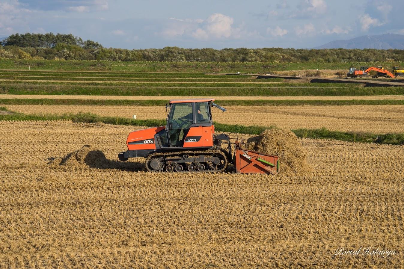 集まった稲ワラをキャタピラートラクターで寄せます