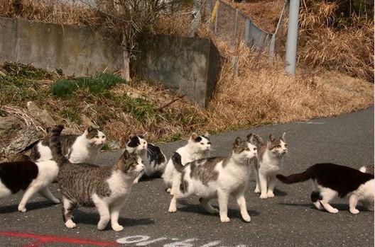 đảo mèo aoshima nhật bản