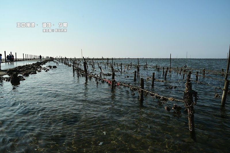 王功漁港濕地生態