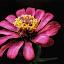 stunning by Erl de Jose - Flowers Single Flower ( nature, plants, bloom, garden, flower,  )