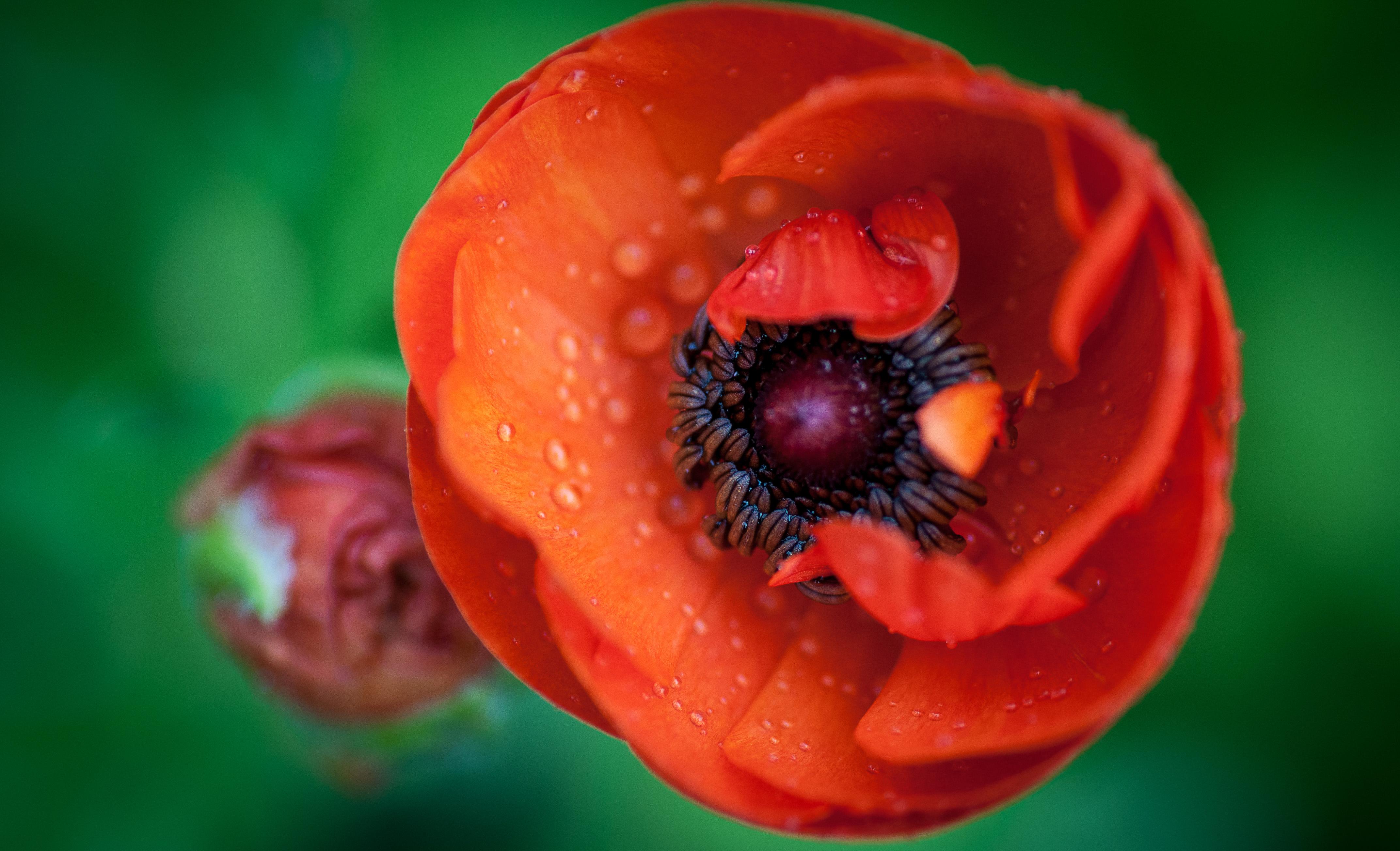 Red flower. di marina_mangini