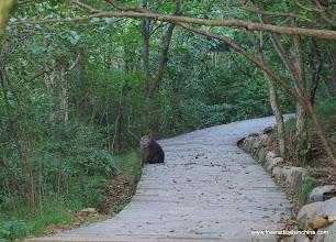 Photo: Monkey sighting!