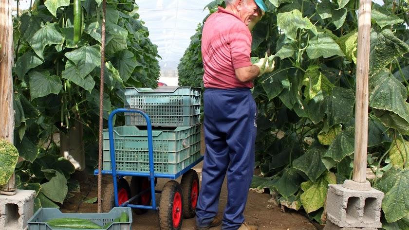 El agro almeriense es un motor de la economía andaluza.