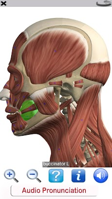 Visual Anatomy Freeのおすすめ画像5