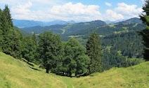 alte Bäume Nagelfluhkette Allgäu
