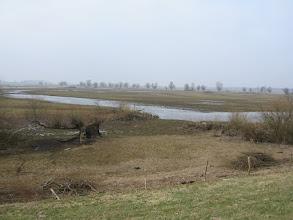 Photo: Sucha zima i wiosna spowodowały, że poziom wody był wyjątkowo niski. ale ptaki wodne już zaczęły ten teren zasiedlać.