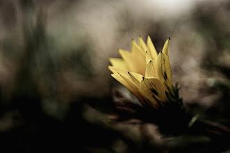 Photo: goodnight dear friends...  #flowers  #flowerphotography  #breakfastclub curated by +Gemma Costa