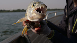 Eye of the Tigerfish thumbnail