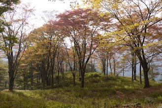 Photo: ケヤキ