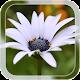 Summer Flower LWP v1.1