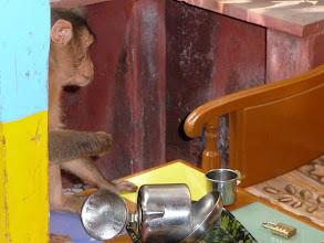 Photo: Monkey raiding my restaurant table as I exited quickly Matheran Maharashtra