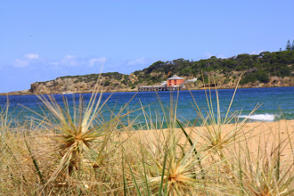 Photo: Year 2 Day 166 -  Spiky Plants on the Beach