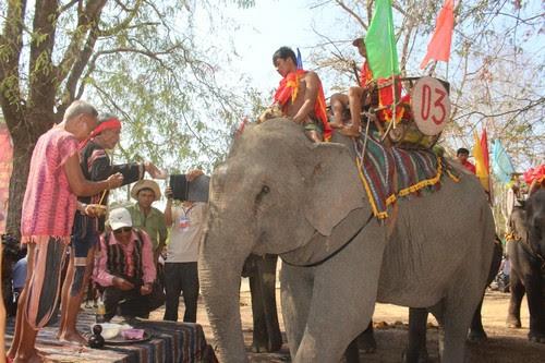 Khu du lịch Buôn Đôn sôi nổi cùng lễ hội voi 3