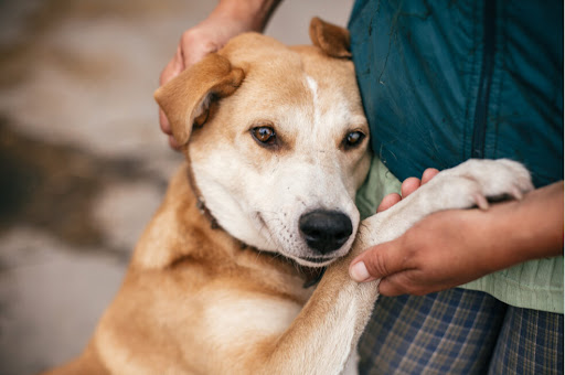 Get to Know the Organization that Helps Animal Grantmakers Connect and Learn
