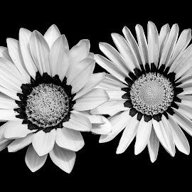 by Mohsin Raza - Black & White Flowers & Plants (  )