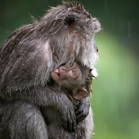 Catching the rain... by Anne Young - Animals Other Mammals